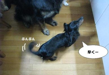 Img_9631gohangohan