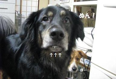 Img_9655okuchiokuchi