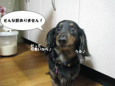 Img_9669detaohimesama