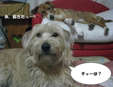 Img_9753washimodaijika