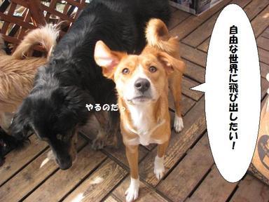 Img_9784dassoukeikakuchu