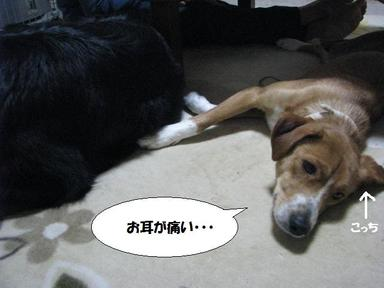 Img_9695omimigaokashii