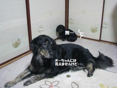 Img_9922jakunikukyoushoku