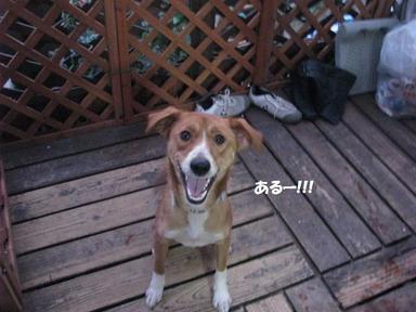 Img_0035shojikiriro