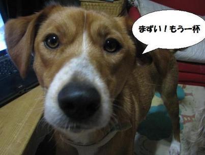Img_0081riroriro