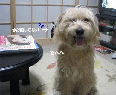 Img_0147warattegomakasu