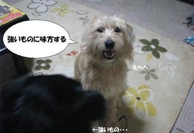 Img_0091haragurochar