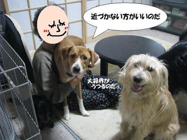 Img_0309sonnakotoicchadame
