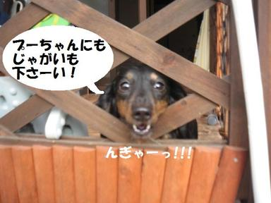 Img_3777_1