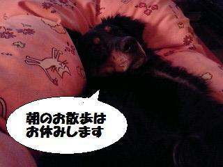 Sleepoli