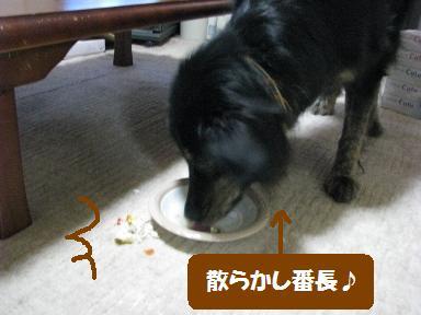 Img_0686chirakashioli