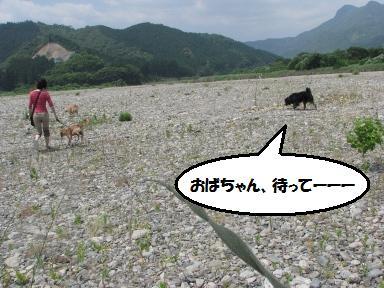 Img_0812obachangaii