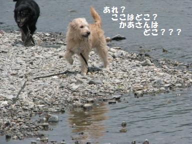 Img_0827kokowadoko