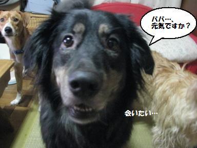 Img_1357babagasuki
