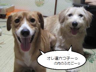Img_2226mutsugo