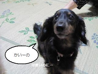 Img_2227kaiino
