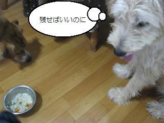 Img_1460hoshii