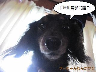 Img_2495puchandesu