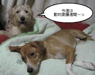 Img_2497sansei