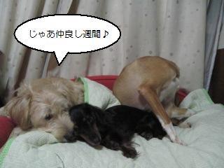 Img_2502nakayoshi