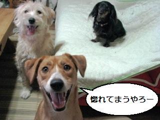 Img_1505kawaikochan