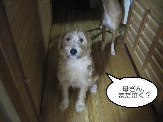 Img_2589hanseishiterukara