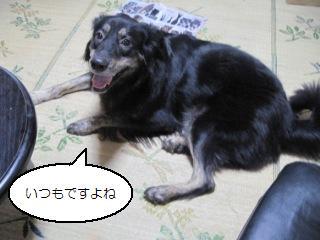 Img_2628itsumoitsumo
