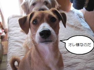 Img_2663kokuhaku