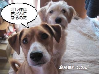 Img_2666madamadakokuhaku