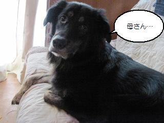 Img_2677kawaikochan