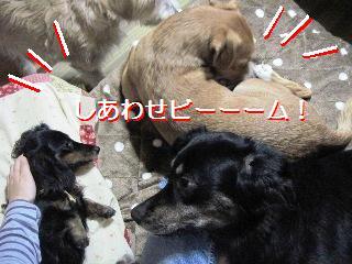 Img_2740shiawase