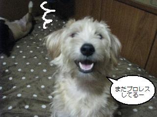 Img_1677ushiroushiro