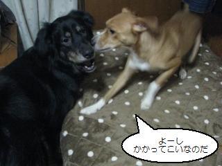 Img_1682shikaeshi_2