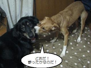 Img_1683shikaeshi_2