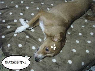 Img_1694suneru