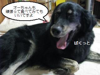 Img_1582kucchauzo