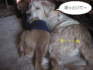 Img_2938rirogasuki