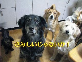 Img_3239samishiino