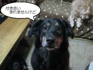 Img_3409maji
