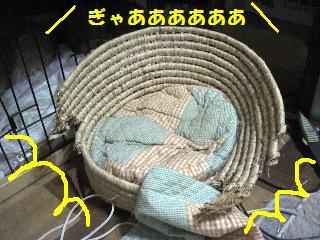 Img_3704bakuhatsu