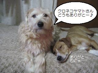 Img_3995arigato