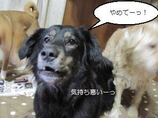 Img_4306hoeru_2