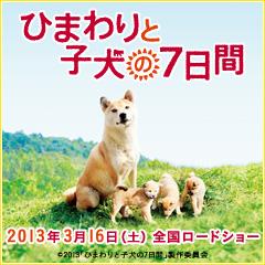 Himawari240x240