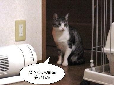 Img_4050