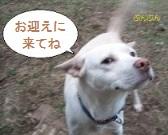 Gakuchan_2